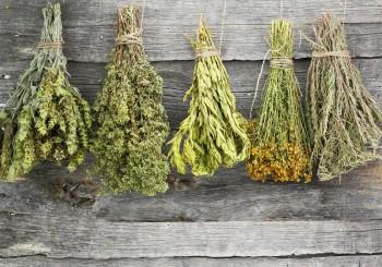 Июль: собираем травы
